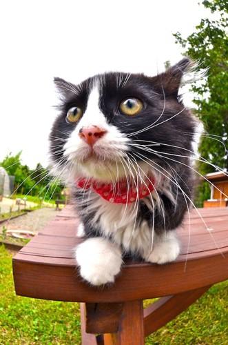 ベンチでくつろぐ立派なヒゲの猫
