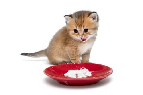 子猫と白いクリームが入った皿
