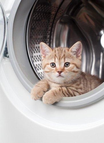 芸人がメロメロの洗濯機の中の猫