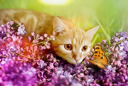 花畑にいる猫と蝶