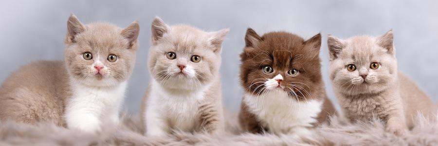 横に並んだ4匹の子猫