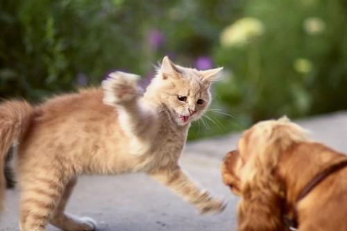 犬にパンチする猫