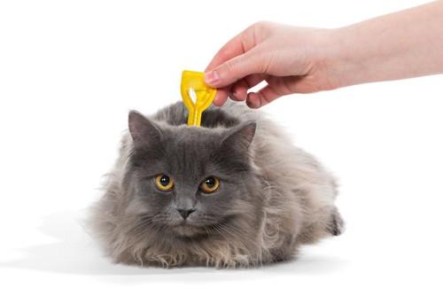 首の後ろにノミ・ダニ駆除剤を垂らしてもらう猫