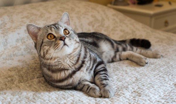 見上げるくつろぐ猫