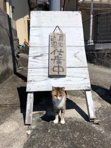 支度中の猫