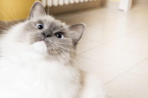 物怖じしない猫