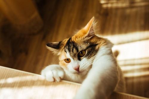 何かにつかまる猫