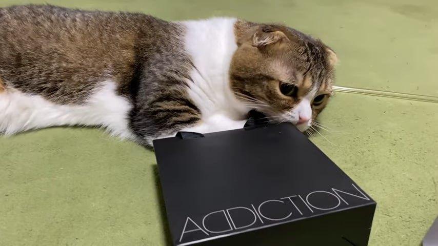 袋の横で寝転ぶ猫