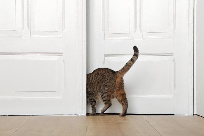 扉の隙間に入っていく猫