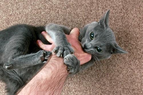 手にかみつき爪を立てる猫