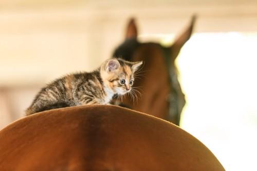 大きな馬の背中に乗る子猫