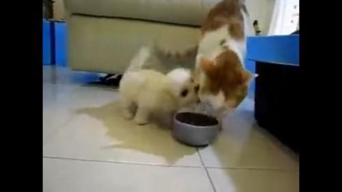 遊ぼ攻撃が激しい犬