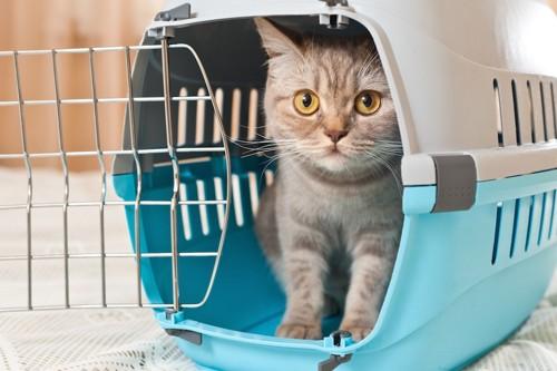扉が開いたキャリーの中の猫
