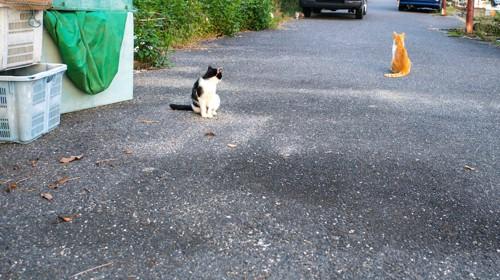 道に座る二匹の野良猫