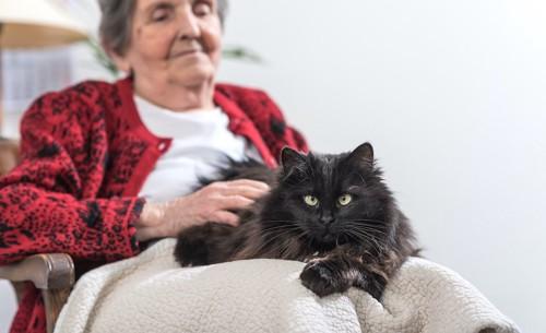 シニア女性の膝の上でくつろぐ猫