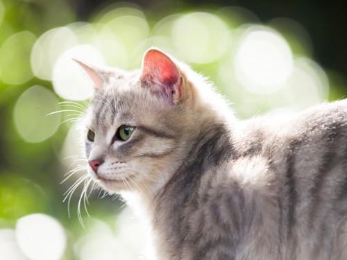 緑の中で横を見る猫