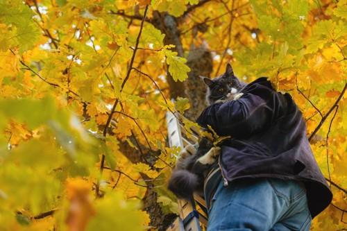 木の下で猫を抱っこする人