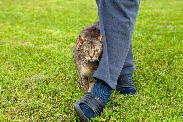青いズボンの人の足にすり寄る猫