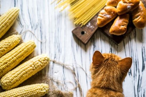 炭水化物と猫