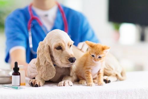 病院にいる犬と猫