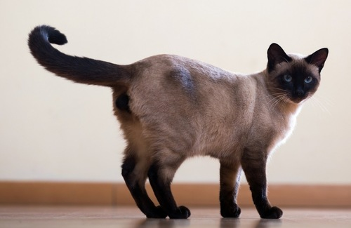 しっぽの先を振る猫