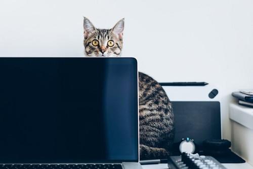 パソコンの裏に座っている猫