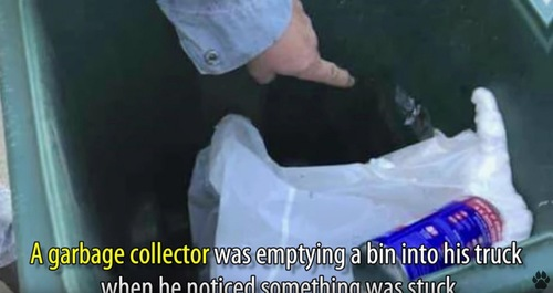 大型ゴミ箱と指差す人の手