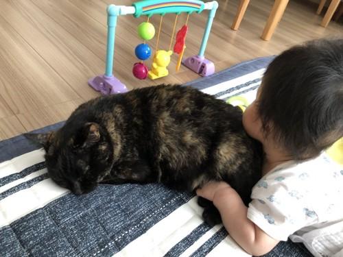 赤ちゃんに抱きつかれるサビ猫