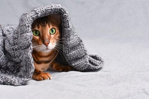 服から出てきた猫