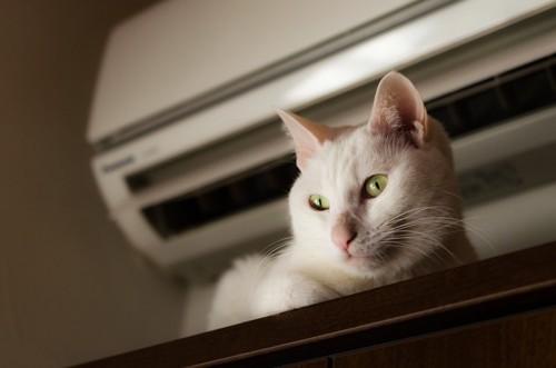 エアコンのそばにいる猫