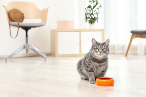 フードボウルを前にこちらを見る猫