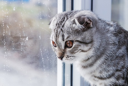 雨を眺める猫