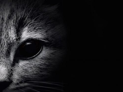 モノクロの猫の顔アップ