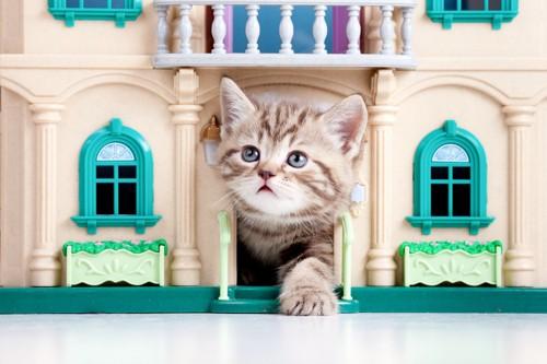 おもちゃの家から出てくる猫