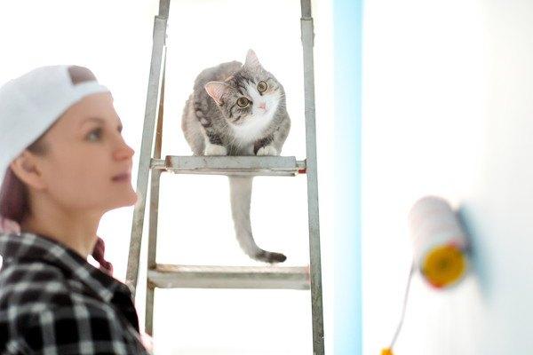 ペンキを塗る女性と猫
