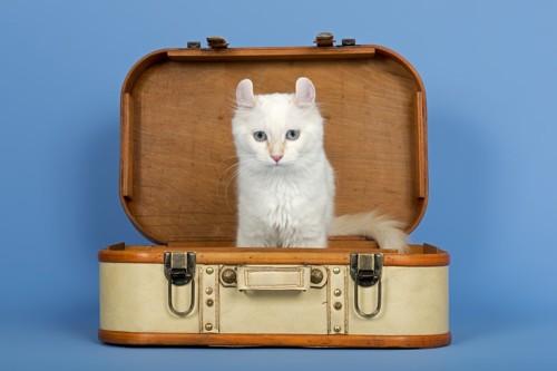 スーツケースに入ったアメリカンカール