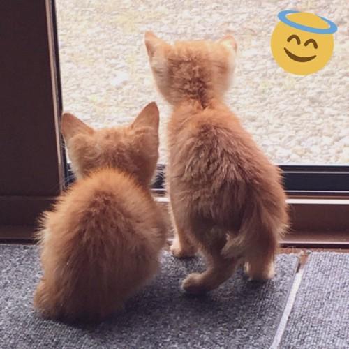 子猫2匹の背中