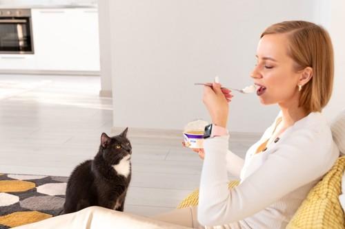飼い主の食事を見つめる猫