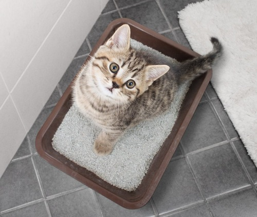トイレの床に座って見上げる子猫