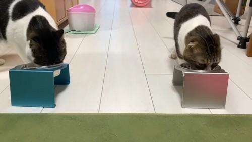 ごはんを食べる2匹