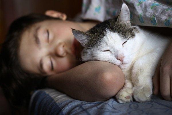 女性の肱で寝る猫