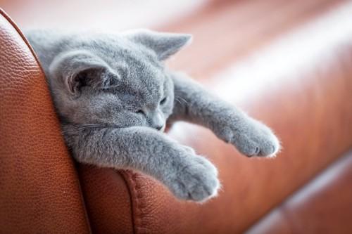 茶色のソファで寝る猫