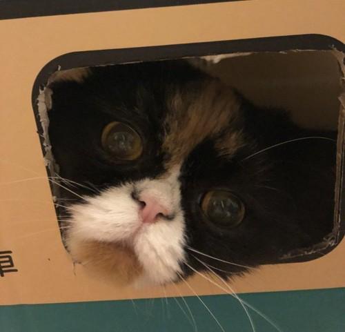 箱から覗く猫