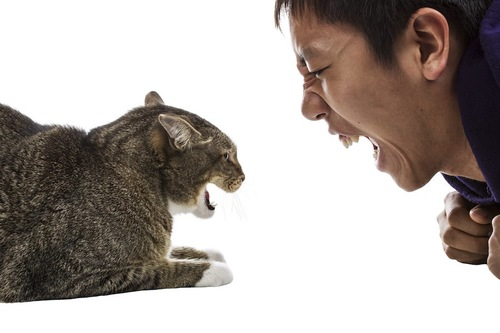 向かい合って叫ぶ人と威嚇する猫