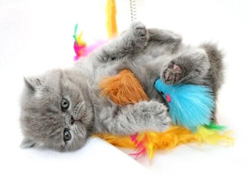 おもちゃの上に寝転ぶ子猫