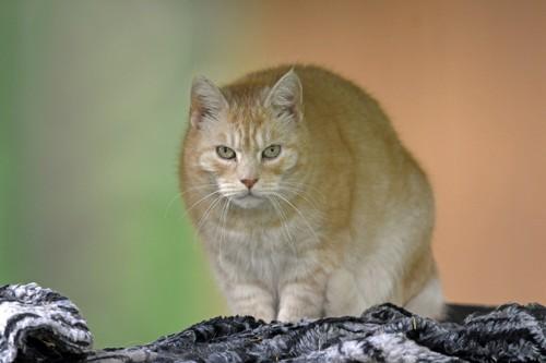 怪しむ顔で見る猫