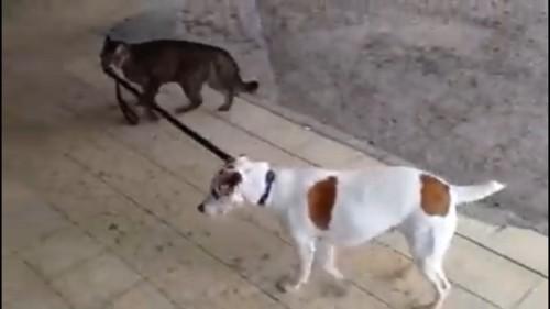 引っ張る猫