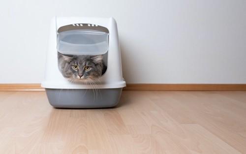 猫用トイレに入っている猫
