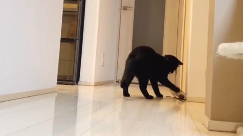 前足でおもちゃにじゃれる子猫