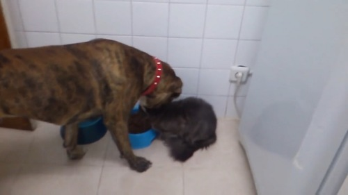 ドッグフードを食べようとする犬